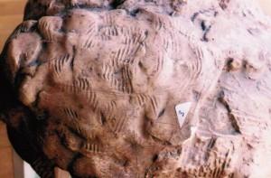 Détail-des-rayures